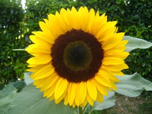 Fleurs Aout 2010 Bienvenue Dans Mon Jardin